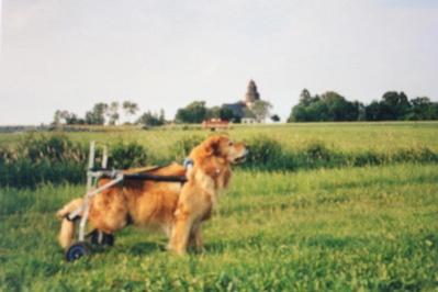 400_Csar-85-Jahre-Sommer-2001